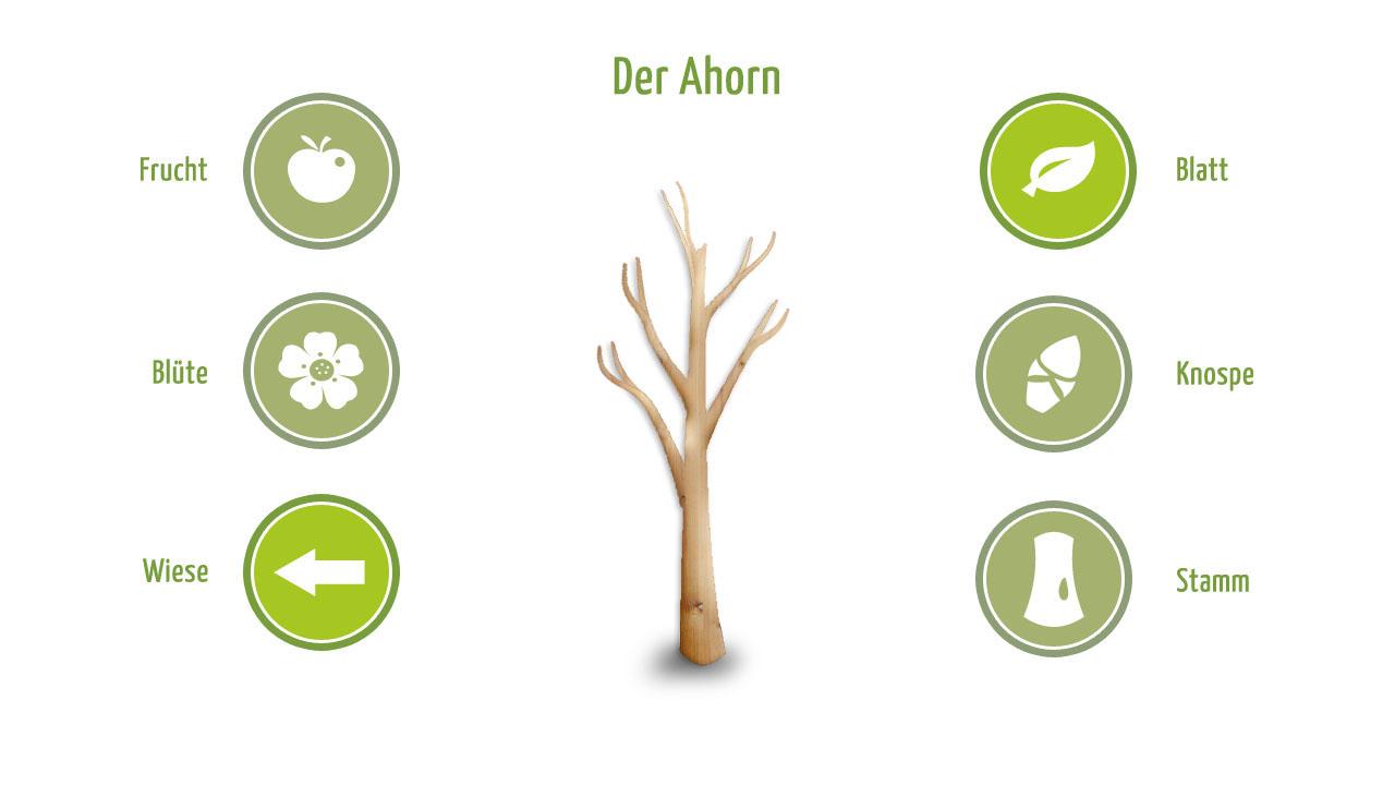 Ahorn Schema 1